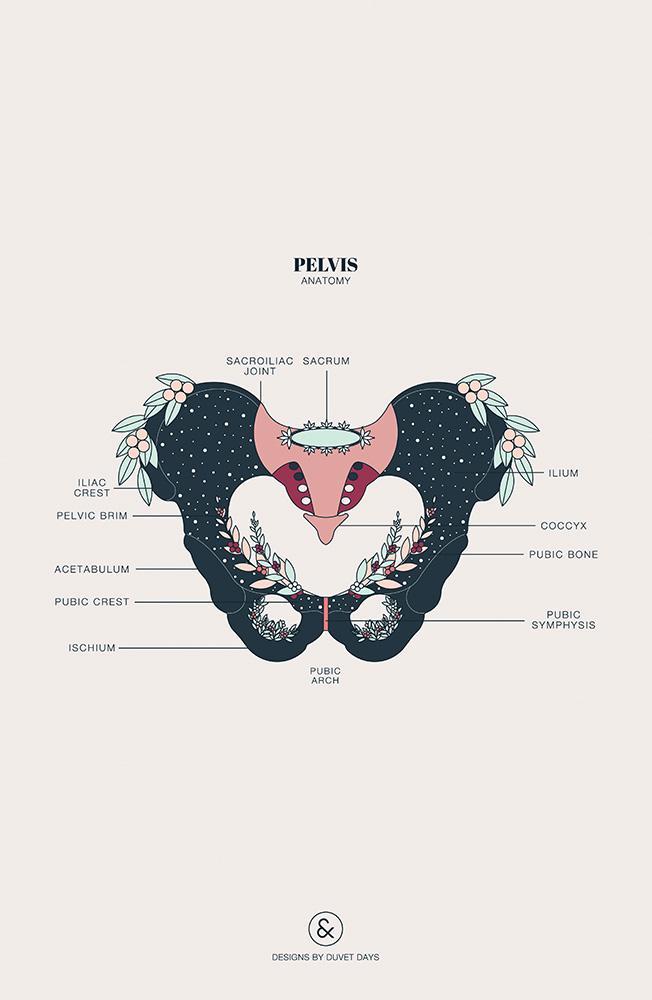 Christine Gruber - psychosomatische Energie- und Körperarbeit | Pelvis Anatomy